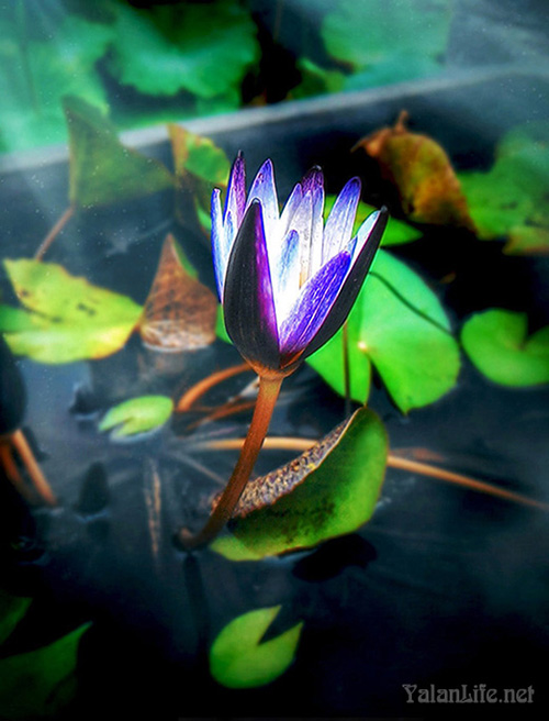 Taipei Museum Art Summer Waterlily Romanticism 台北历史博物馆 夏日睡莲 艺术 浪漫主义 Yalan雅岚 黑摄会